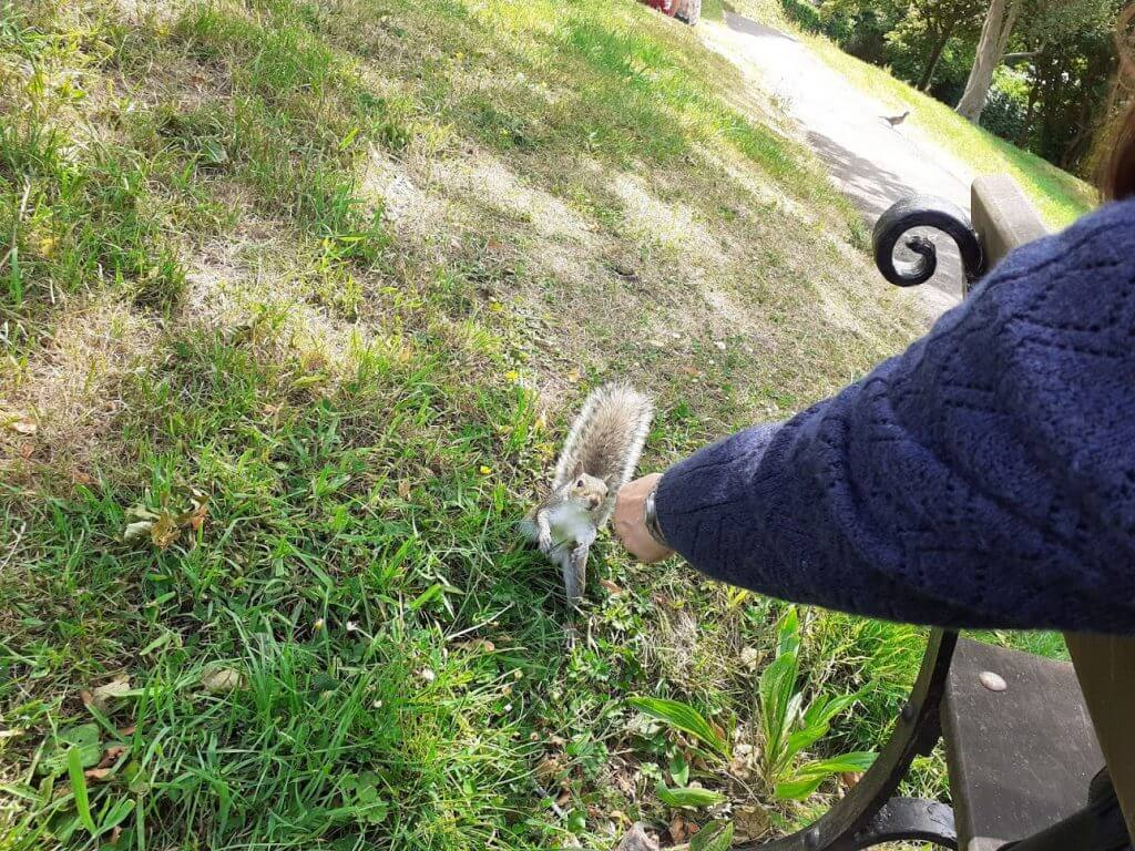 Feeding Squirrels on Brandon Hill